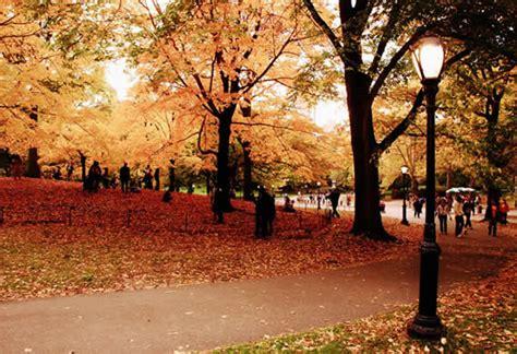 fall  central park  york