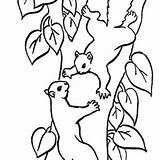 Squirrel Tree Climbing Coloring Drawing Cute Nut Pages Line Baby Oak Drawings Related Clipartmag Getdrawings sketch template