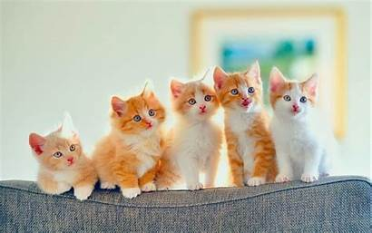 Cats Wallpapers 1080p Resolution Cave