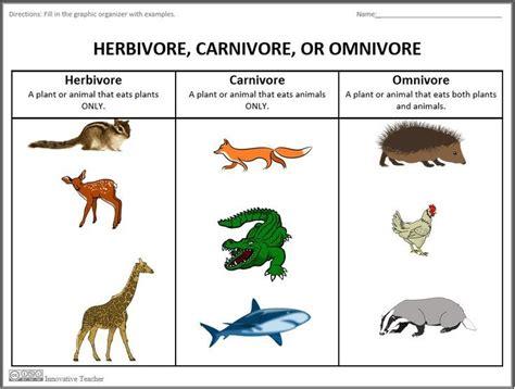 carnivore omnivore herbivore science omnivores carnivores herbivores graphic animal organizer activities carnivoros animales animals examples worksheet differentiation chain teacherspayteachers guardado