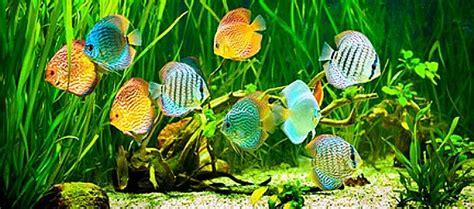 comment avoir de beaux poissons monpoissonexotique