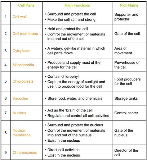 cell organelles coloring worksheet 6th grade life science pinterest coloring worksheets
