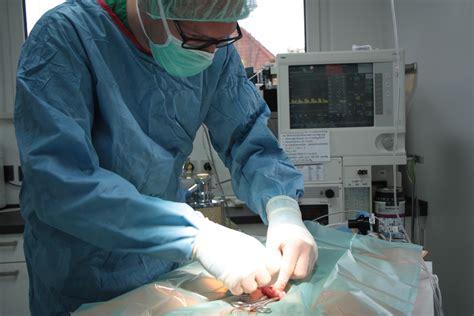 Chirurgie  Tierarztpraxis Am Mittelpunkt