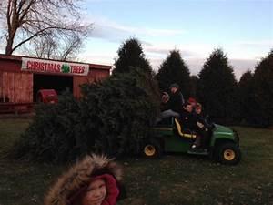Conifera Christmas Tree Farm | Choose and Cut Trees