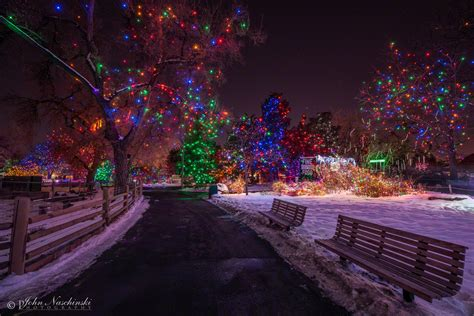 zoo lights at the denver zoo photos