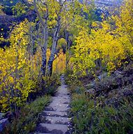 Durango Colorado Fall Colors