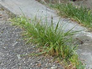 Comment Enlever Les Mauvaises Herbes : mauvaises herbes que faire ~ Melissatoandfro.com Idées de Décoration