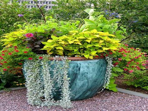 annual flower garden designs large container gardening