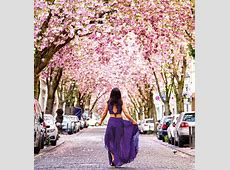 Vivid Cherry Blossom Avenue in Bonn, Germany Places To