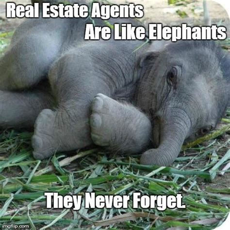 real estate agents   elephants   forget