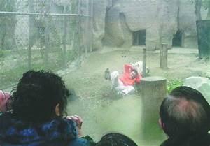 Yang Jinhai: Depressed man jumps into tiger enclosure at ...