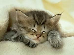Cute Sleeping Baby Animals