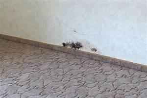 Weißer Schimmel An Der Wand : schimmel an der wand beseitigen frag mutti ~ Michelbontemps.com Haus und Dekorationen
