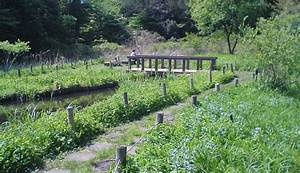 Tokyo Travel: Institute for Nature Study - Nature Reserve