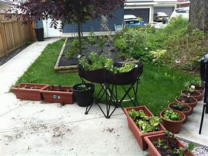 Backyard Vegetable Gardening And Top 10 Vegetables And