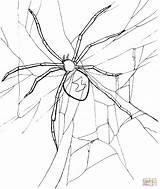 Trapdoor Coloring Spider Template sketch template