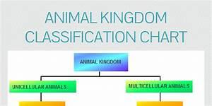 Animal Kingdom Classification Chart by James - Infogram