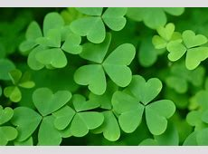 St Patrick's Day 2018 History, Folklore, Recipes, and