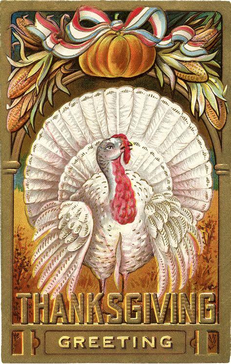 thanksgiving clip art white turkey  graphics fairy