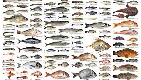 pesci cucina nomi di ristoranti di pesce firenze esselunga parassiti