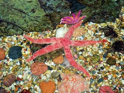 Starfish Pretty Animals Brain Need Survive Star
