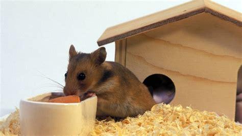 Hamsterhaus Was Sie Beim Selbstbauen Beachten Sollten