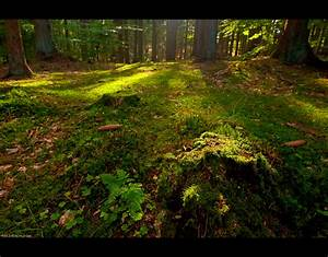 forest floor by keldbach on deviantart With forrest flooring