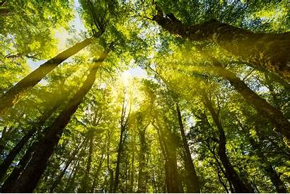 Trees Through Sunlight Forest Shining Climate Change