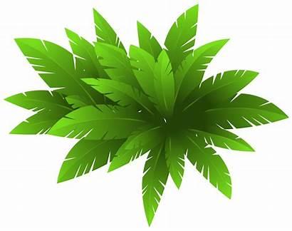 Plant Clipart Decoration Clip Transparent Background Bushes