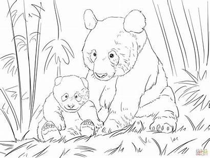 Panda Coloring Pages Bear Pandas Drawing Printable