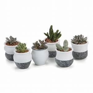 Pot A Cactus : cacti pots ~ Farleysfitness.com Idées de Décoration