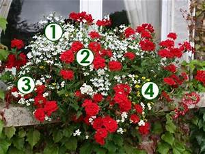 Jardiniere Fleurie Plein Soleil : fleurs tombantes pour jardiniere ~ Melissatoandfro.com Idées de Décoration
