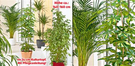 Was Ist Eine Solitärpflanze by Solit 228 Rpflanze Aldi S 252 D Ansehen