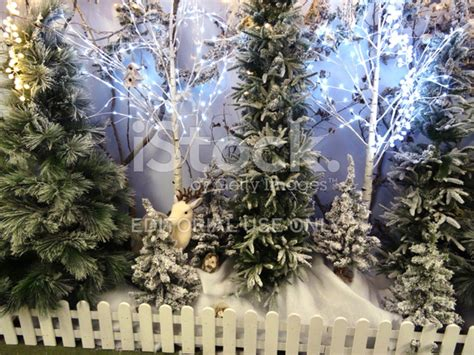 christmas trees for winter forest woodland display christmas trees snow 7572
