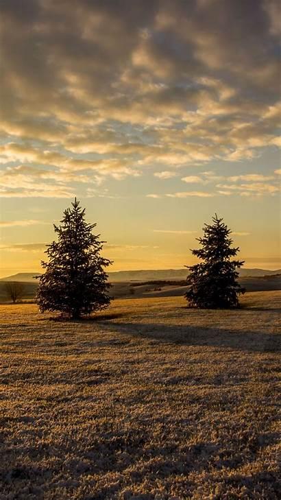Sunset Grass Trees Fir Sky Iphone Outdoor