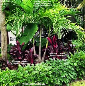 Palm Tree Landscaping Landscape Tropical With Fountain ...