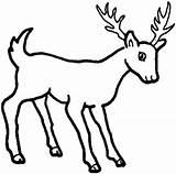 Animals Deer Coloring Printable Pages Drawings Drawing sketch template