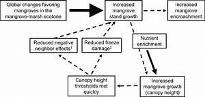 A Conceptual Diagram Of A Proposed Positive Feedback Loop