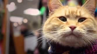 a cat named bob a cat named bob coming to america