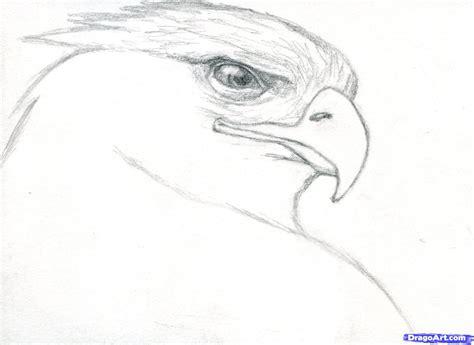 draw  realistic eagle golden step  birds animals