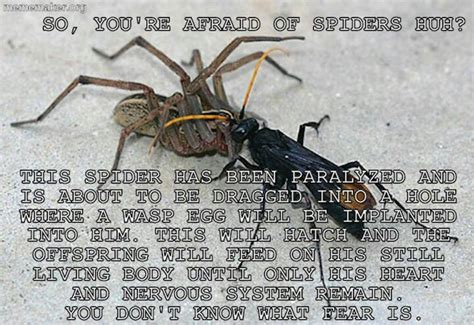 Afraid Of Spiders Meme - afraid of spiders facts that will blow you mind or maybe not