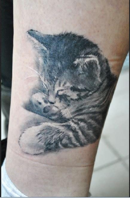 cute sleeping  kitten tattoo  leg tattooimagesbiz