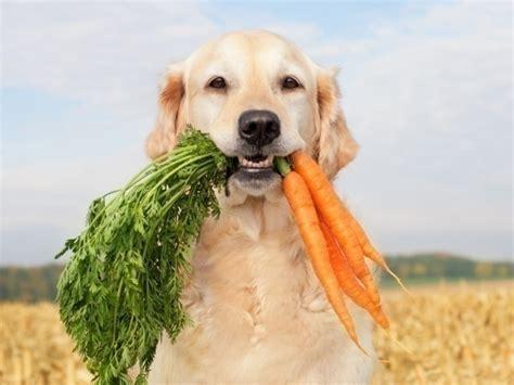 dog eat safely foods lover australian
