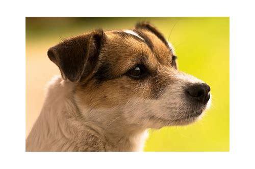 baixar treinador cães de guarda flings