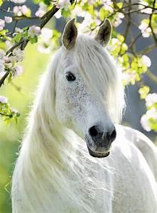 Au Cheval Blanc : cheval blanc 500 teile ravensburger puzzle acheter en ligne ~ Markanthonyermac.com Haus und Dekorationen
