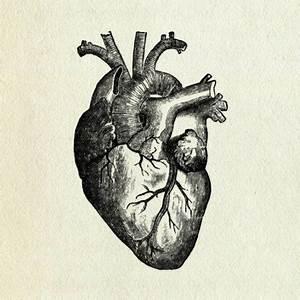 amazing, anatomical heart, b&,w, beautiful, black and ...
