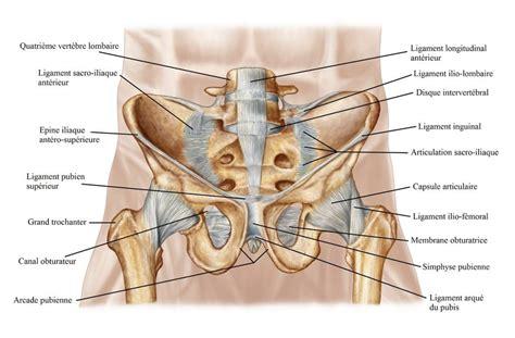 fracture cadre obturateur gauche douleur pendant la grossesse au ventre musculaire ou ligamentaire