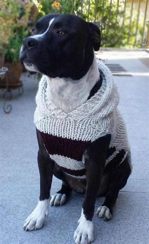 sweaters for boxer dogs best 25 sweater pattern ideas on coat