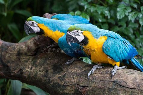 parrots stock image image  brilliant parrot budgie