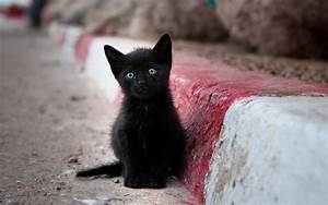 Black kitten with blue eyes / 2560 x 1600 / Animals ...
